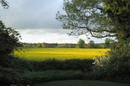 Blick Grundstück Ferienhaus auf Feld