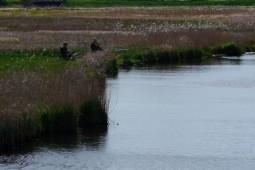 Angler Eider